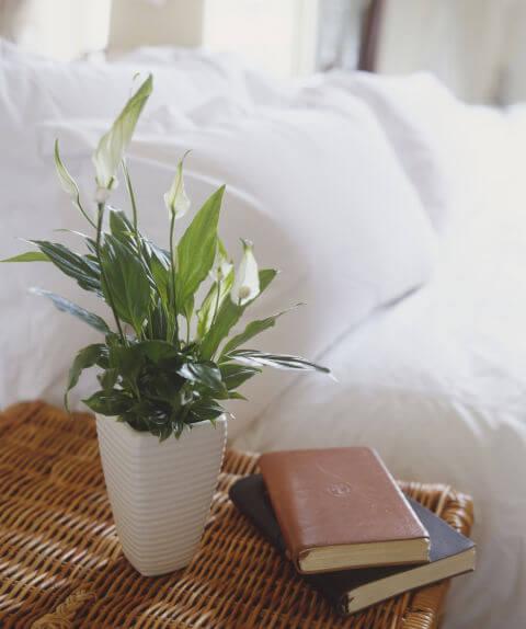 Tìm Ngay Những Loại Cây Này Để Làm Sạch Cho Nhà Đẹp Của Bạn